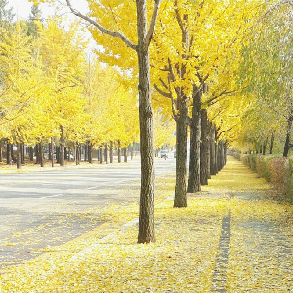 Jeny Nguyen, Yellow trees