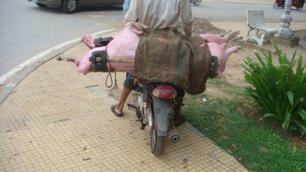 Rabah au Cambodge 2