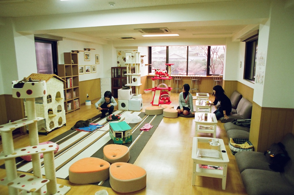 Nekokaigi, a small cat café in Kyoto