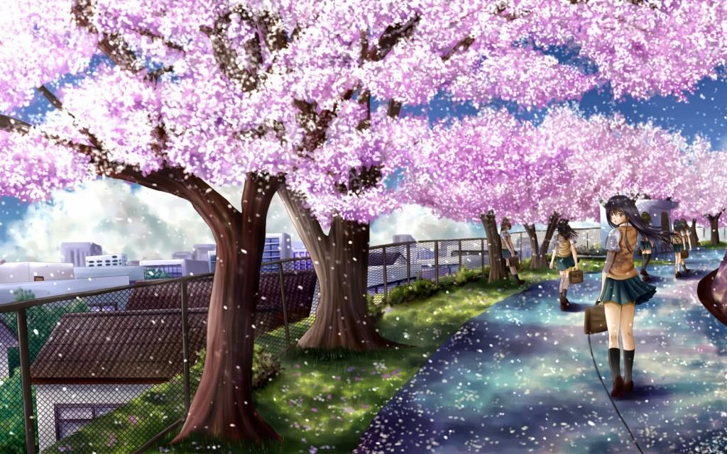 Sakura Tree HD Wallpapers 0